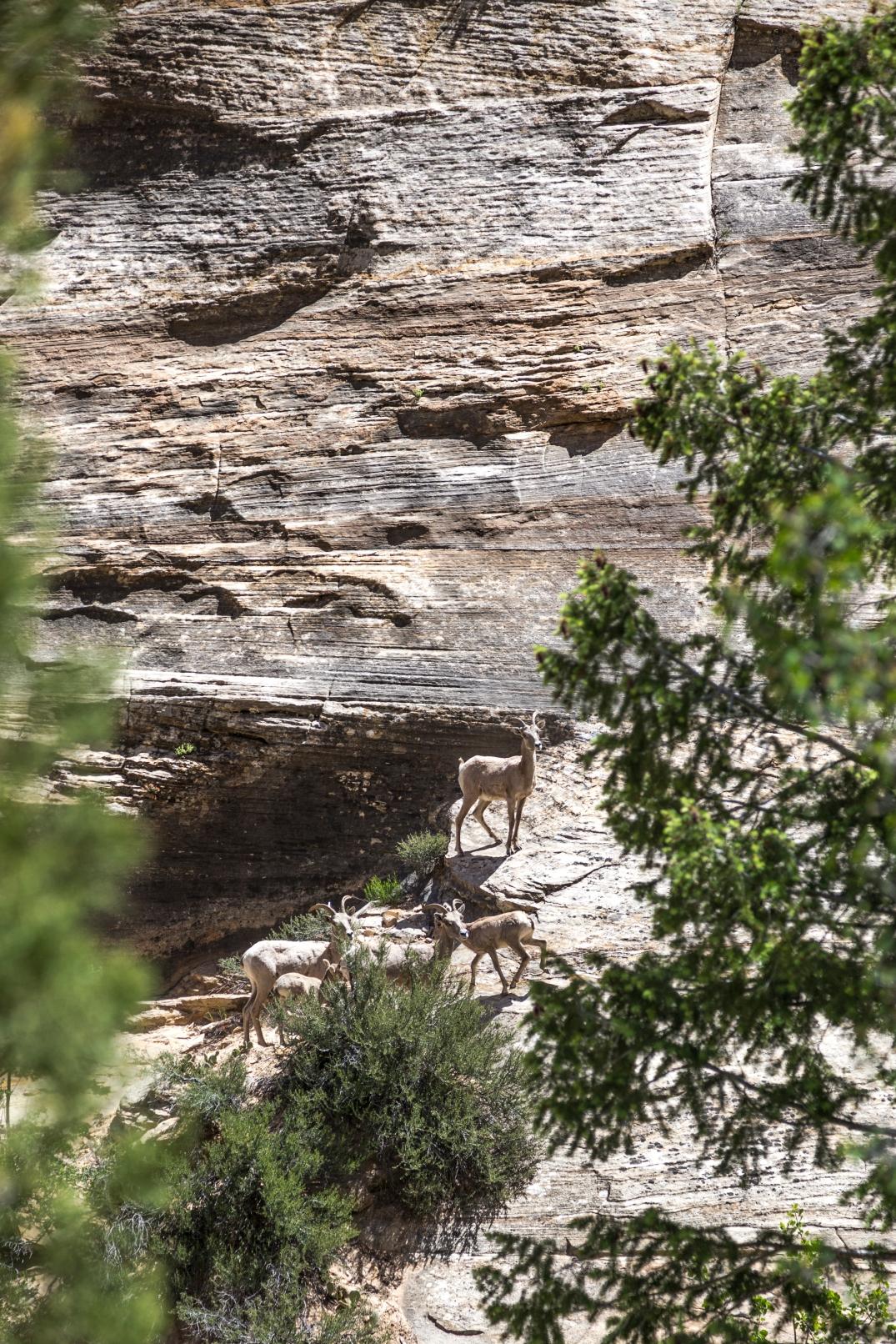Bryce-Canyon-23