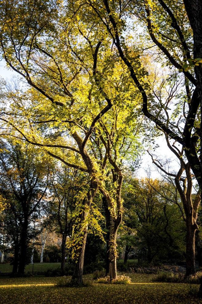 Central-Park-Fall-2a