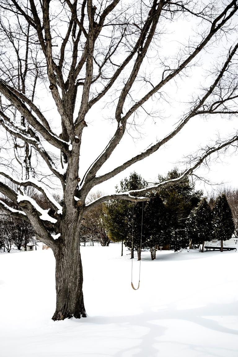 Snowy-Tree-1
