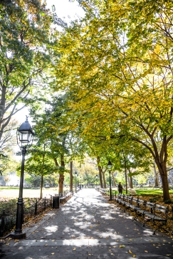 Washington-Square-Park-Fall-1