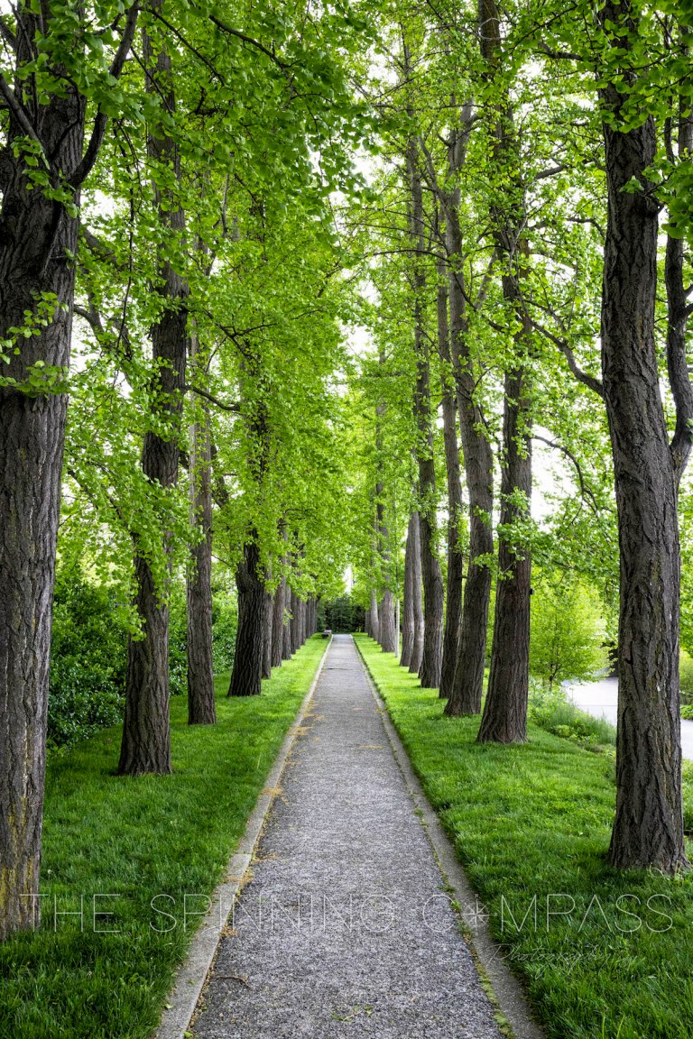 Lush green tree-lined path