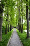 Lush green tree-lined path