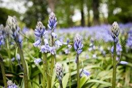 Purple Flowers in a Field